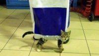 Kedi Poşeti