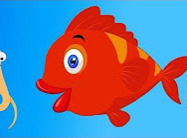 Kırmızı balık gölde şarkısı dinle