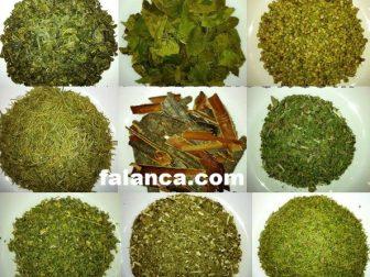 9 Bitki Zayiflama Cayi Yapilisi Yorumlari 1