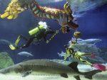 Beijing Aquarium 4