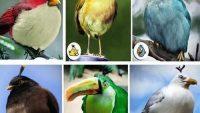 Angry Birds Kuşları