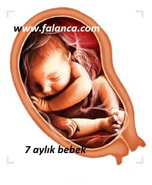 Anne Karninda Yedi Aylik Bebek
