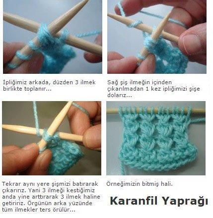 Karanfil Yapragi 1