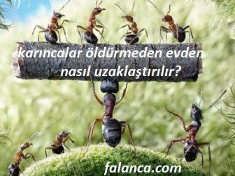 Karıncaları öldürmeden nasıl uzaklaştırılır?