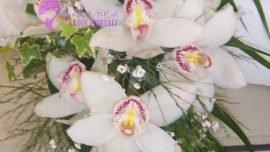 Uzun Gelin El Çiçeği
